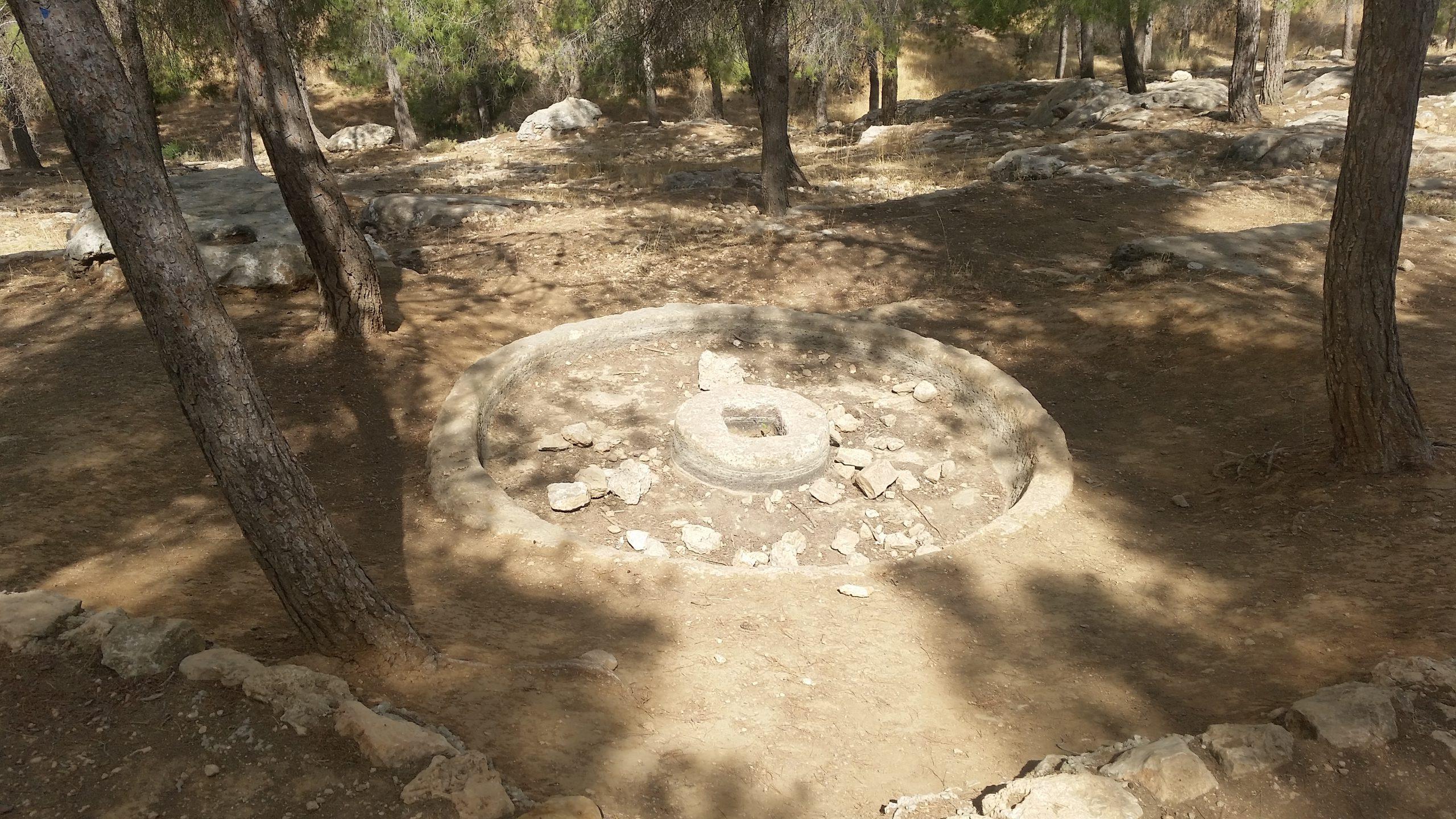 Ancient olive oil press in Yatir Forrest