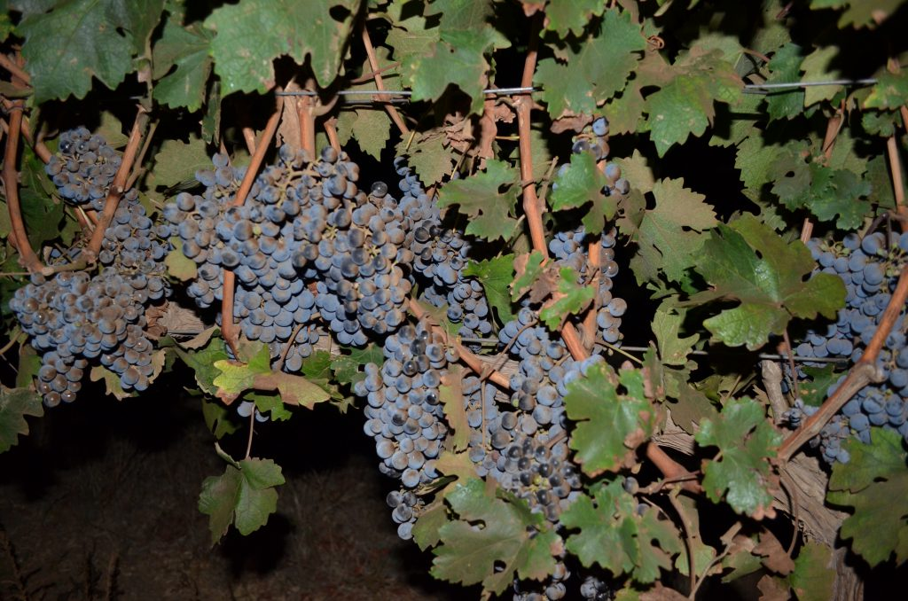 grapes at night