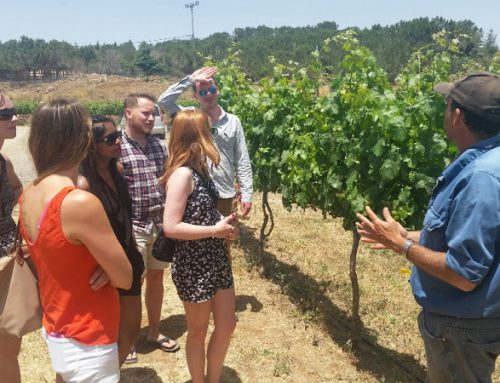 Visiting Ortal Winery located at the heart of the Golan Heights