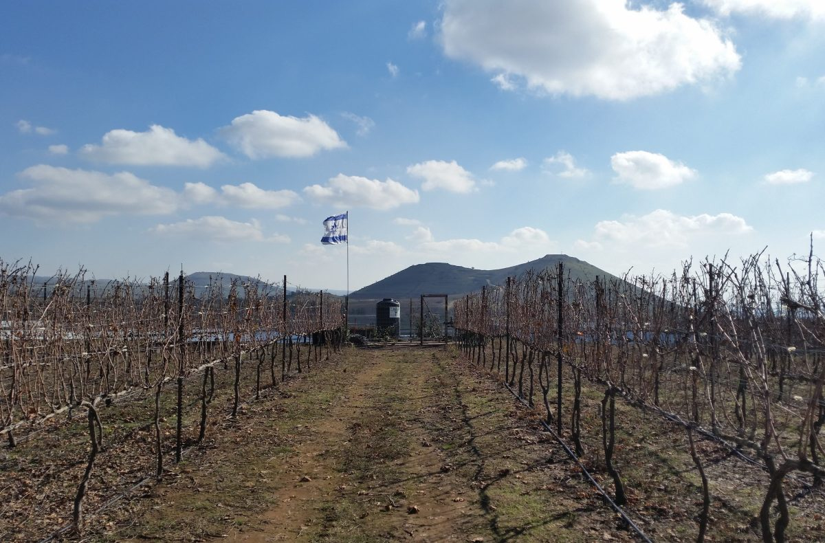 Golan Heights Wine Tour