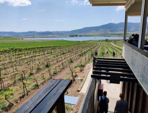 Visiting Lower Galilee Wineries